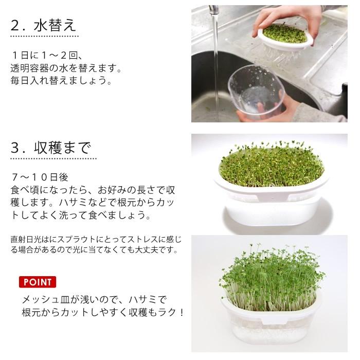 ブロコリースプラウト栽培セット