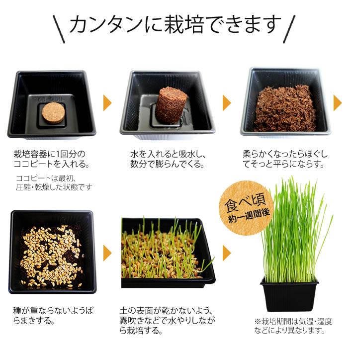 ネコ草栽培セット