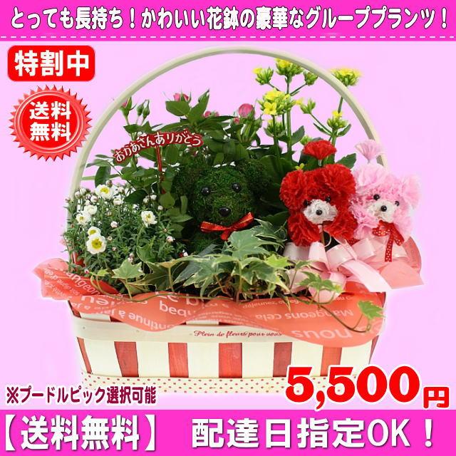 2019母の日長持ち!豪華花鉢アニマルバスケット4,980円【送料無料】