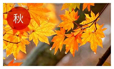 【秋】秋雨、イネ科の花粉対策に