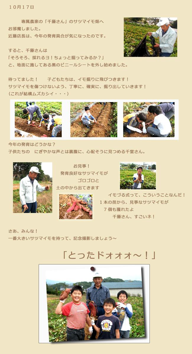 サツマイモ収穫の様子