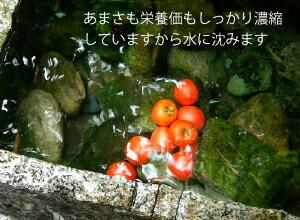 【高糖度トマト】【アメーラ】【トマト】