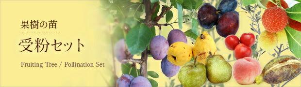 季節の特集:果樹の苗:受粉樹セット