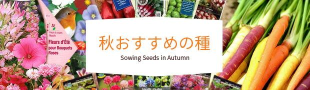 秋おすすめの種