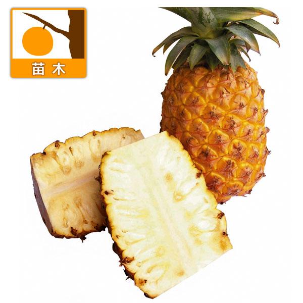 パインアップル:大玉種3.5号ポット