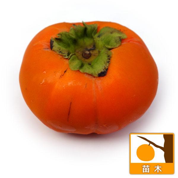 カキ(柿):そうしゅう(早秋)4号ポット