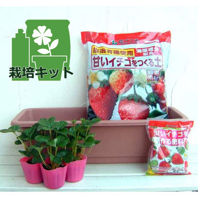 いちごプランター栽培キット:紅ほっぺ3株セット