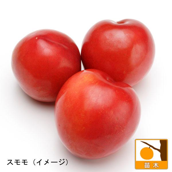 スモモ(プラム)2種受粉樹セット:サンタローザと大石早生