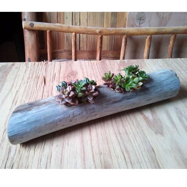 流星木Lサイズ(多肉植物5種寄せ植えの流木フラワーポット)