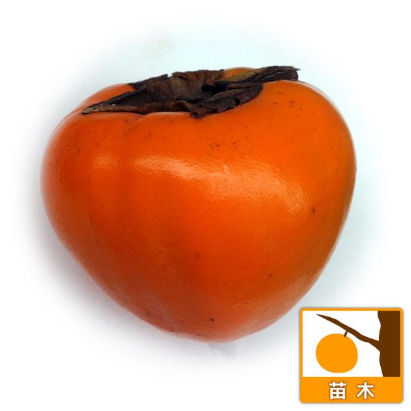 カキ(柿):富士(ふじ)4〜5号ポット