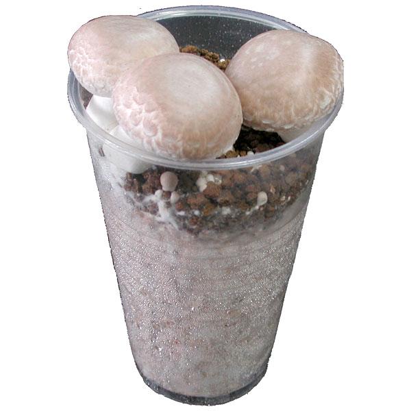 キノコップ:ブラウンマッシュルーム栽培キット