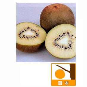 キウイ2種受粉樹セット:ゴールデンキングとマック