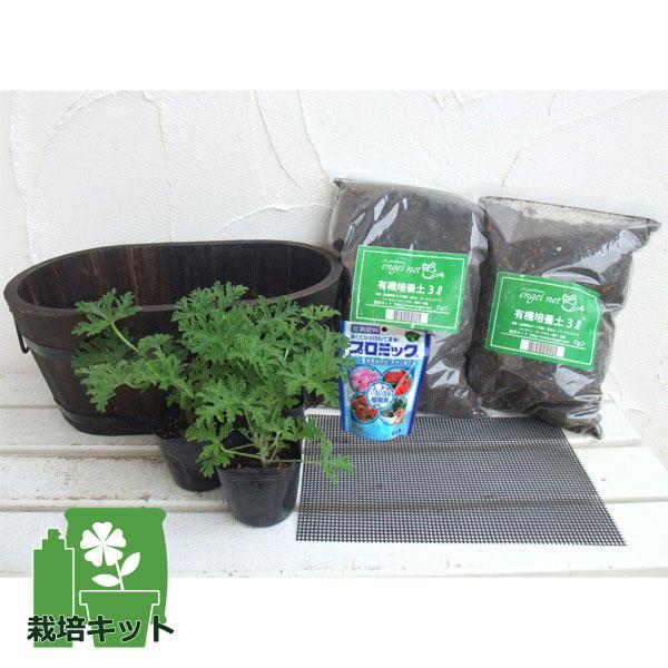 蚊よけ植物・蚊連草(かれんそう)栽培セット(鉢・土・肥料付き)焼き杉プランター