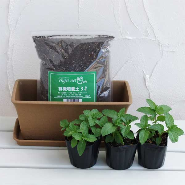 ハーブのミニプランター栽培セット:スペアミント