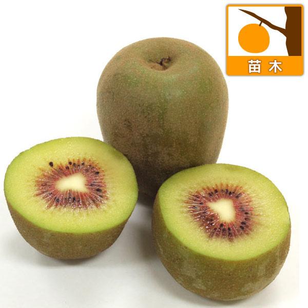 キウイ2種受粉樹セット:紅妃(コウヒ)と早雄(ソウユウ)4〜5号ポット(メス木・オス木)