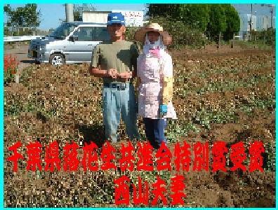 千葉県下で有数の落花生作りの名人西山夫妻