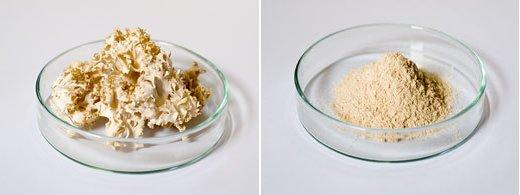 左:ハナビラタケ乾燥原体 右:ハナビラタケ粉末