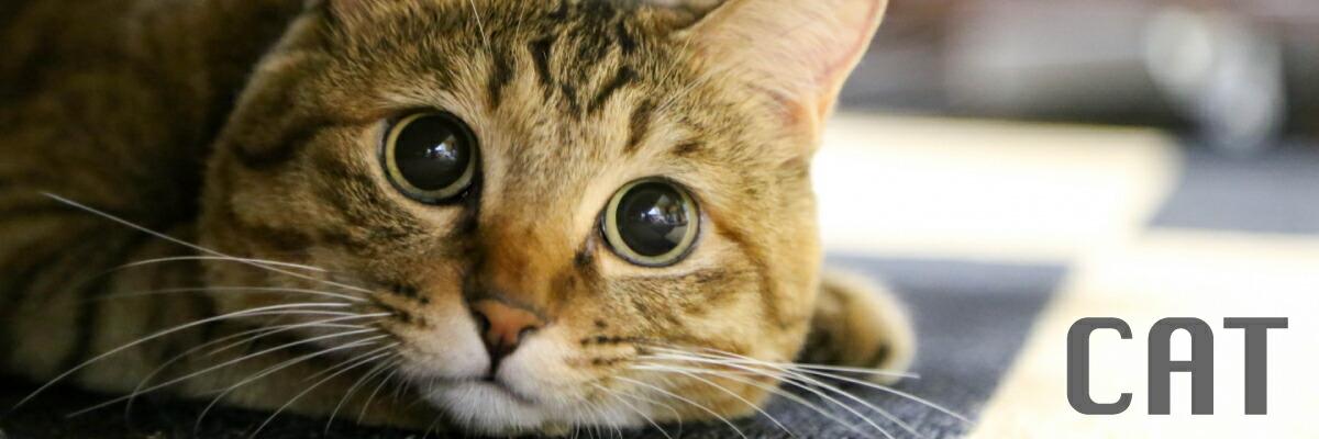 CAT 猫用品