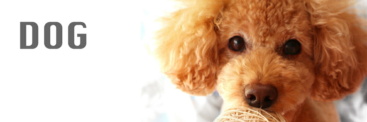 DOG 犬用品