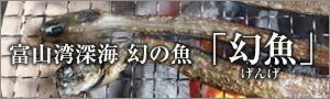 富山湾深海 幻魚(げんげ)