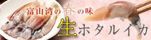 【送料無料】富山湾・滑川産 ホタルイカ 生 生食用 2018年新物