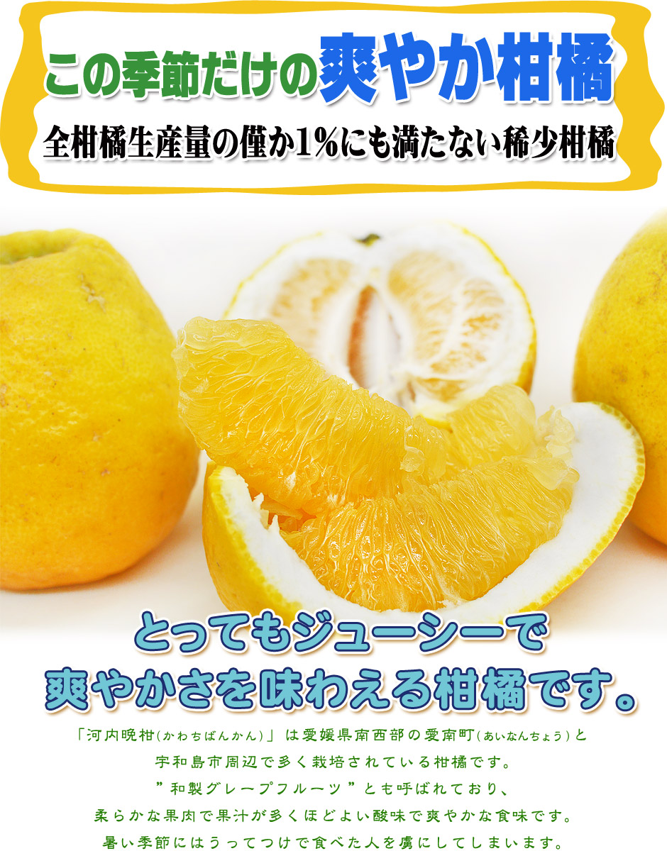 河内晩柑hp-02