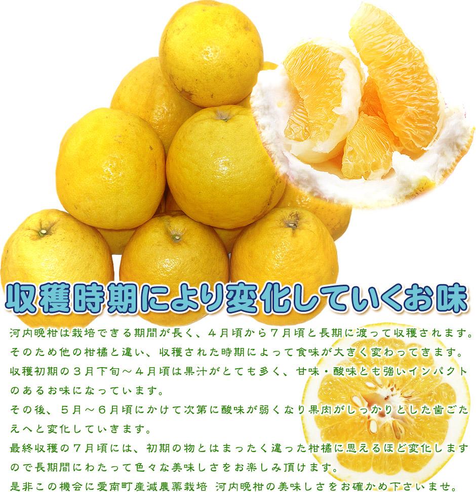 河内晩柑hp-03(初期のお味は)