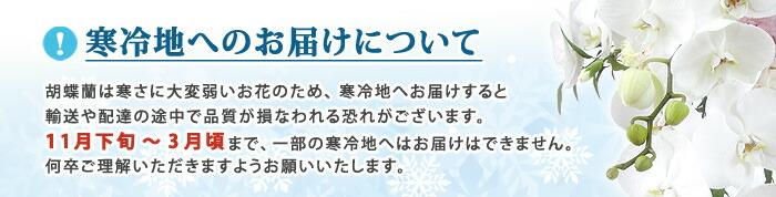 冬季における胡蝶蘭の配送に関する注意点