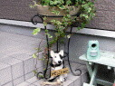 garden_gdxm_img4.jpg