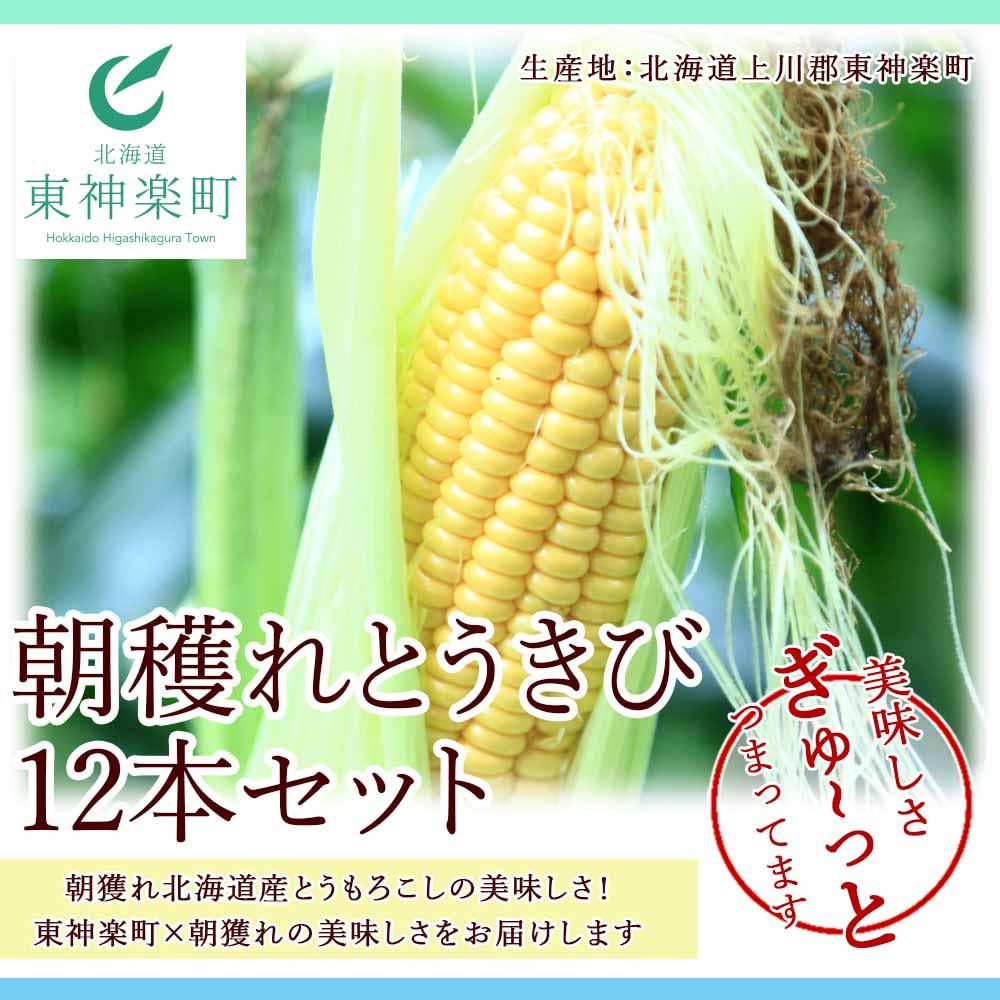 北海道東神楽町 【ふるさと納税】朝穫れとうきび12本セット 【N009】