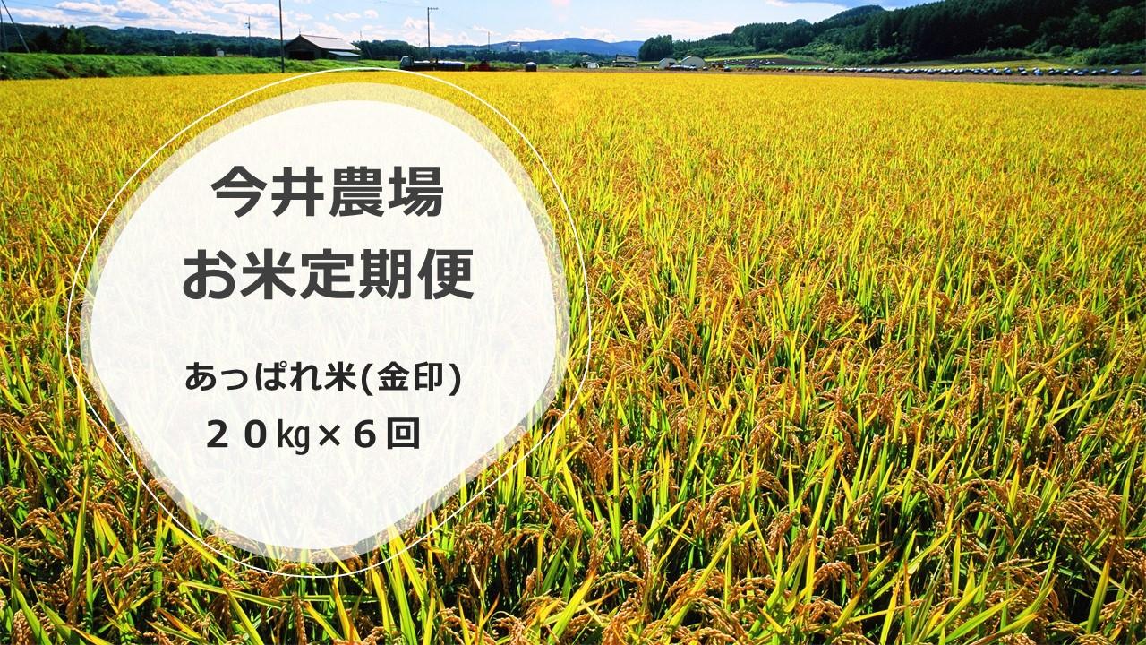 北海道津別町 【ふるさと納税】【定期便】今井農場 あっぱれ米(金印)20kg×6回(隔月)