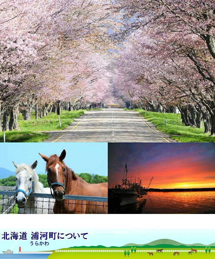 浦河町西舎(にしちゃ)の桜並木、競走馬、港の夕焼け