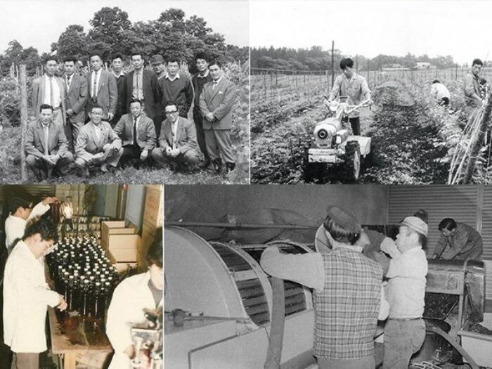昭和35年に結成されたブドウ愛好会や当時のブドウ栽培及びワイン醸造