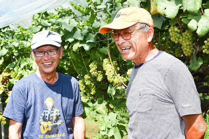 毎年高い品質のワイン用ぶどうを生産するべく丹精込めて栽培しています。