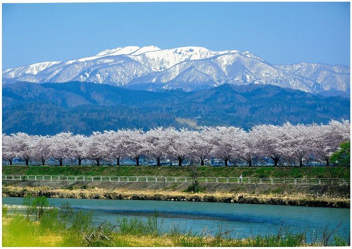 山形県の「日本一さくらんぼの里 さがえ」は、果物や米など豊かな恵みいっぱいのまちです。