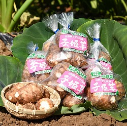 おいしさいっぱい里芋! 伝統野菜 「子姫芋」 3kg(500g×6袋)