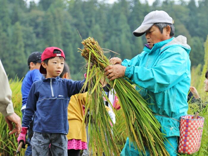 稲刈り体験の様子
