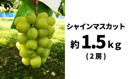 福島県福島市 【ふるさと納税】No.0774 シャインマスカット(2房)約1.5kg