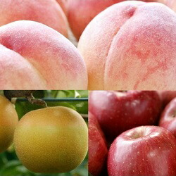 【先行予約】フルーツ3種定期便(桃3kg、梨3kg、林檎3kg)