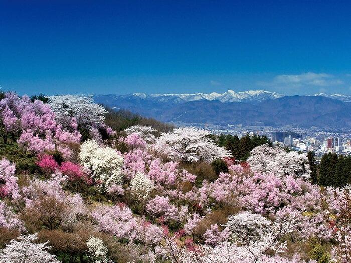 花見山から見た福島市街地の眺望