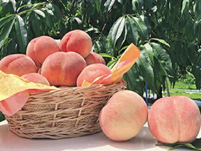 福島県は全国第2位の桃の生産量を誇ります。