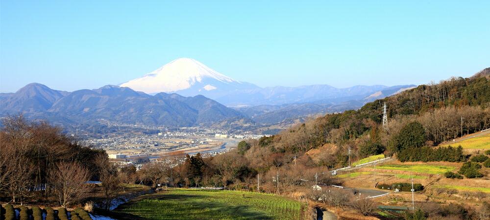神奈川県大井町楽天ふるさと納税