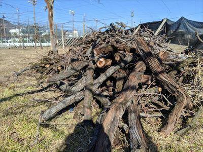 ワインの原料となるぶどう栽培をやめたぶどう畑