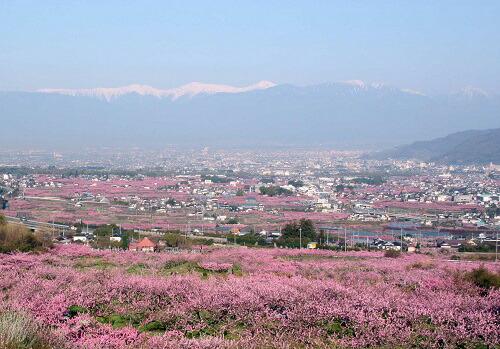 桃、ぶどうの生産量は日本一を誇り、春には約30万本の桃の花が一斉に開花した様子は、まるで桃源郷のよう