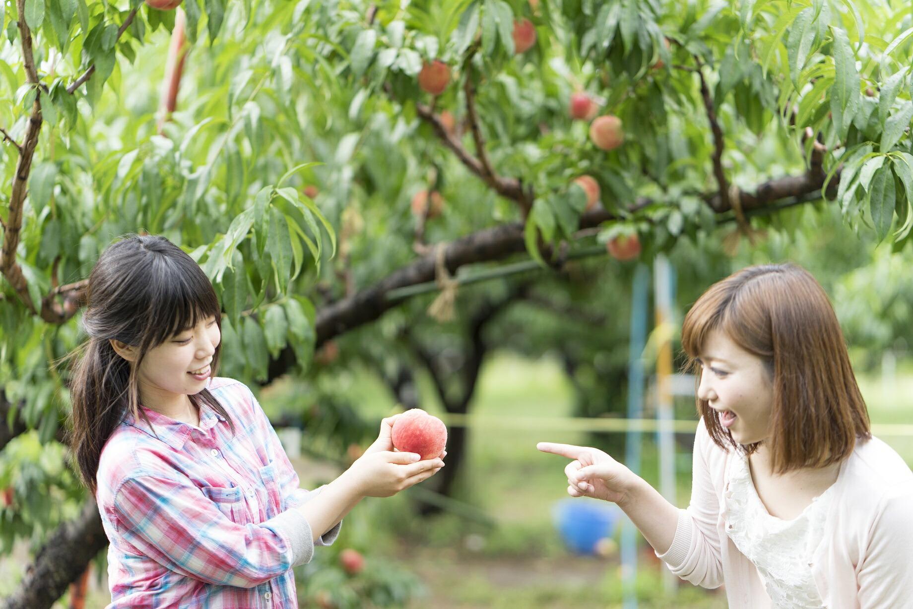 コロナ禍で観光客が激減!桃・ぶどう生産量日本一の郷、笛吹市の低迷している観光産業の活気を取り戻したい!