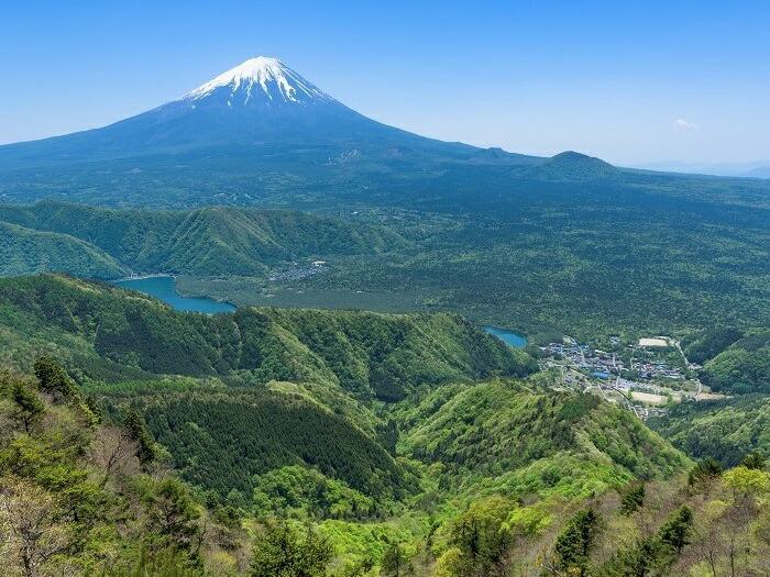増えすぎた野生鹿の獣害から富士山の環境を守り、鹿肉を地域資源として有効活用して富士山麓をジビエの聖地にしたい!