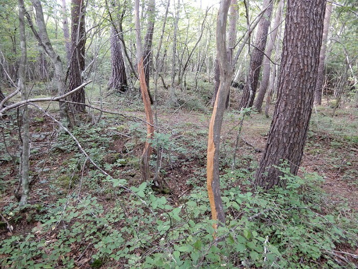 森や農地では増えすぎた野生鹿による被害を受けています