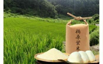 長野県岡谷市 【ふるさと納税】001-041 橋原蛍米(5kg)