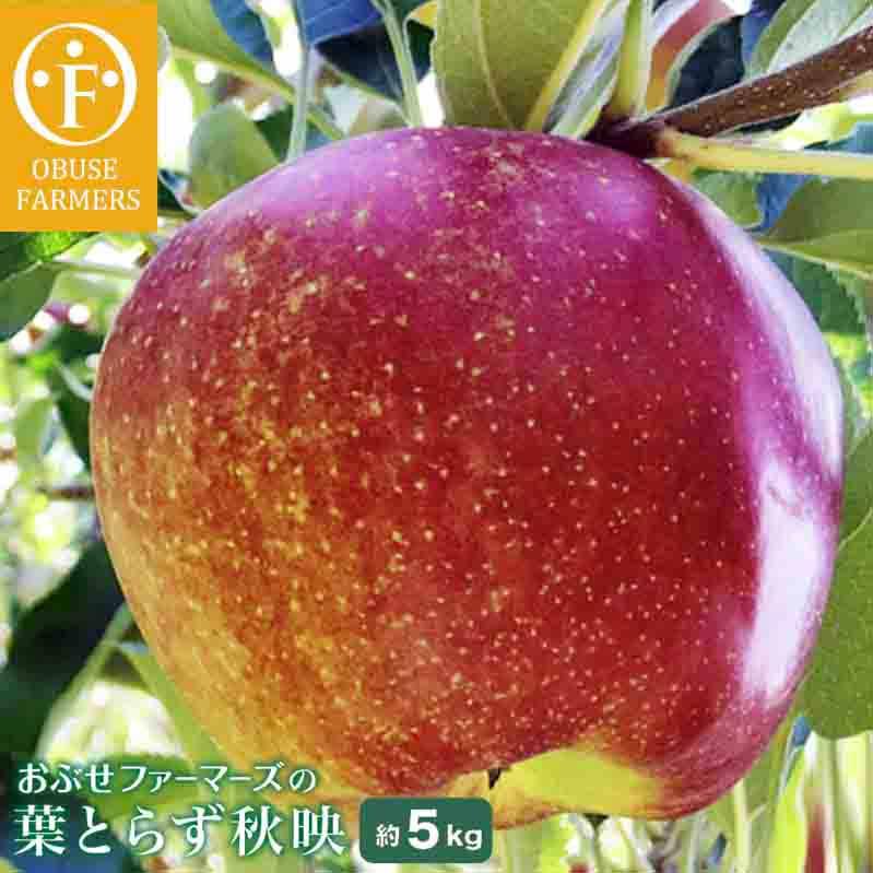 長野県小布施町 【ふるさと納税】おぶせファーマーズの「葉とらず秋映 約5kg」