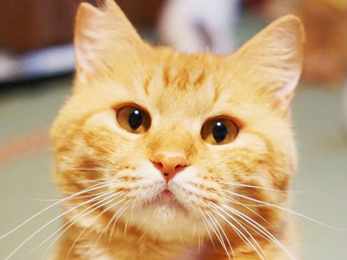 日本一の猫助け事業を飛騨市から!猫の力で地域の社会問題を解決し猫も救うソーシャルビジネスSAVE THE CAT HIDAを立ち上げたい!